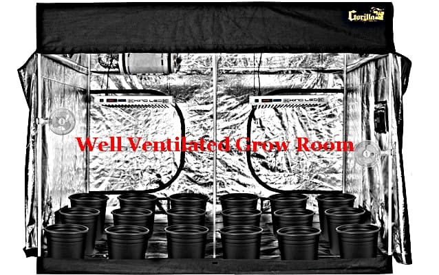 A Complete Discussion On Grow Tent Ventilation Setup