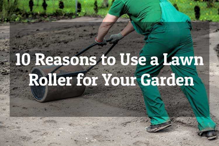10 Reasons to Use a Lawn Roller for Your Garden