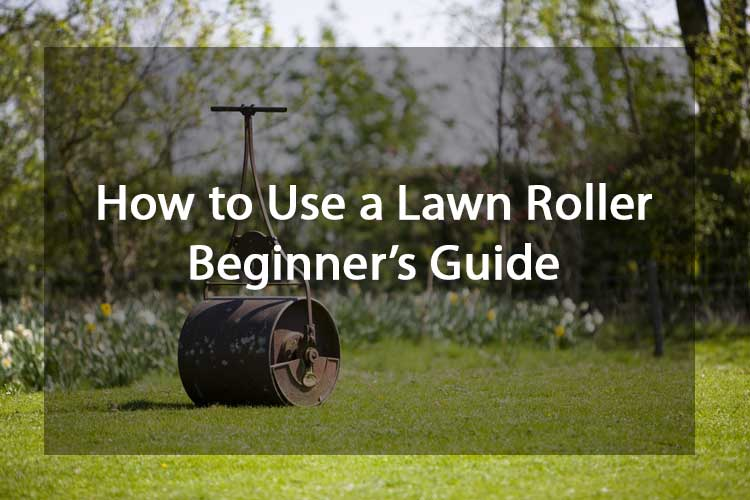 How to Use a Lawn Roller - Beginner's Guide