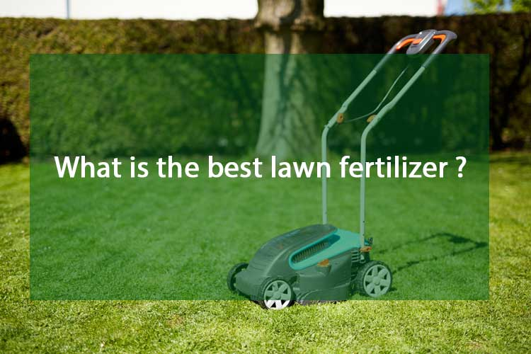 What is the best lawn fertilizer