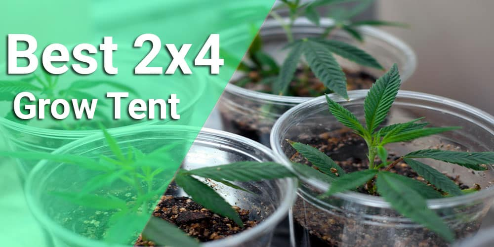 2x4 grow tent reviews