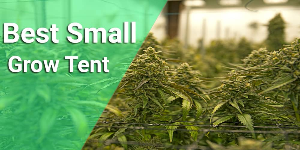 small grow tent reviews