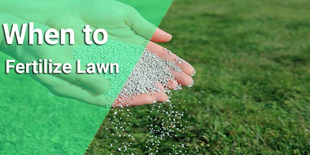When To Fertilize Lawn Trips And