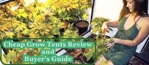 Cheap Grow Tents Review