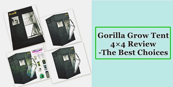 Gorilla Grow Tent 4×4 Review